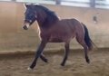 DONRIELLO - Elegant 3 Year-old