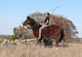 **FULL VIDEO** Kid safe ranch/playday & college level heel/calf/break away gelding