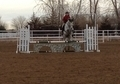 Flashy TB Mare for sale!