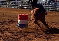 Granddaughter of MISTER DUAL PEP- Stunning Barrel Racing Mare