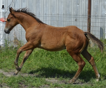 Horses for sale in Missouri | HorseClicks