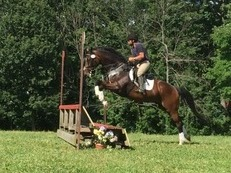 FANCY 9YO 17H TB G- SUCCESSFUL @ NOVICE, SCHOOLING TRAINING WITH EASE!
