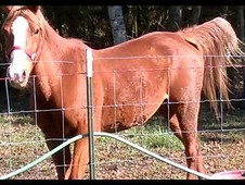 Sweet Mare needs home....