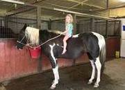 Super gentle paint gelding