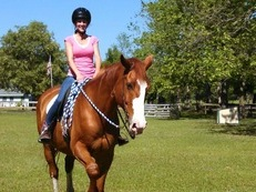 Draft Cross Trail gelding (belgian/throroughbred)