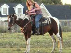 Bombproof Gaited Trail Horse