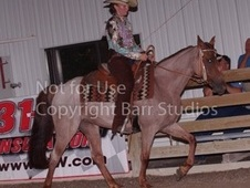 Flashy red roan mare