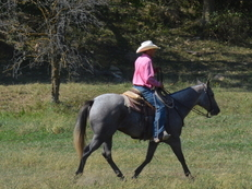 2012 Rose Gray Ranch/Head/Trail horse