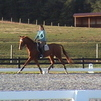Talented - Flashy - Oldenburg Mare - Breed or Show
