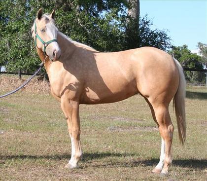 Horseclicks Properties Florida
