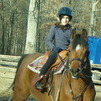Arabian Western Pleasure Gelding