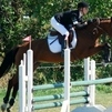 Talented 9 year old mare for sale