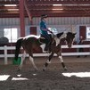 5 yr old Professionally trained HJ & Dressage