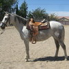 Thoroughbred Horse for sale Dolly