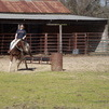 APHA 06 Bay mare