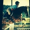 great warmblood jumper for long term lease