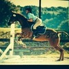 awesome warmblood for lease/lease to buy