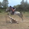 Welsh pony mare for sale
