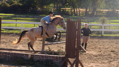 Horse for half/full lease wanted