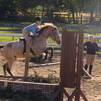 Horse for half/full lease wanted**