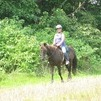 Large aged black pony gelding