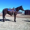 Super Heel Horse/Mounted Shooting Horse
