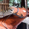 Lucy Hancock's Head Shot