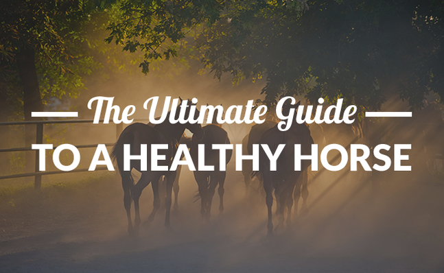 Horse Health Care (The Ultimate Guide)