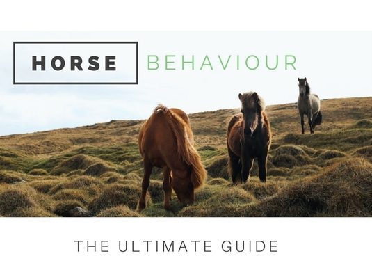 Ultimate Guide To Horse Behaviour