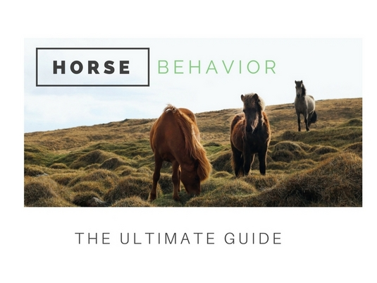 Ultimate Guide To Horse Behavior