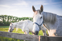 Omega Fatty Acids in Horses