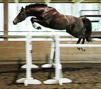 Free Jumping: What it is and Why Teach your Horse