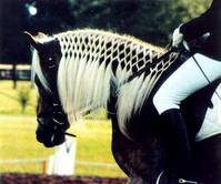 How to Braid a Forelock