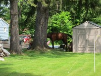 In My Backyard? Is keeping a horse at home right for you?