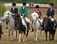Join the Club: Are Horse Clubs Worth It?