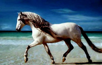 The Antediluvian Andalusian - An Ancient And Aspiring Horse