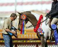 Making Money at Horse Shows: Learn and Earn at the Same Time
