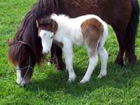 Teaching a Foal to Lead