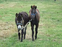 What Should a Yearling Know?