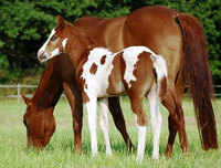 What to Look for When Buying a Foal