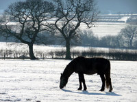What to Feed Your Horse in the Winter