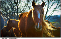 An Owners Guide to Loaning a Horse