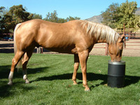 6 Cool- Down Tips for your Horse this Summer
