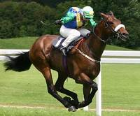 The Thoroughbred Horse: Thoroughly Bred For Distance Racing