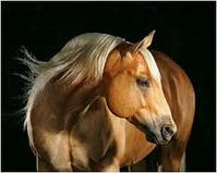 Go For the Gold with the Golden Palomino Horse
