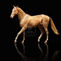 The Ancient Akhal-Teke - The Horse with the Metallic Sheen