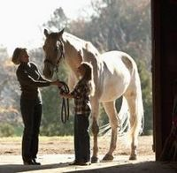 Bonding with Your Horse - Part 2 – Becoming Friends