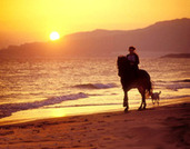 How To Book The Perfect Riding Holiday