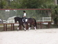 Erin Swaney dressage