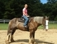Second Chance Stables, LLC